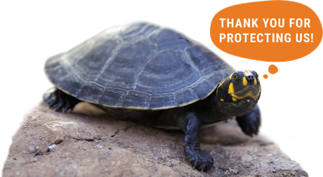Turtle with speech bubble reading 'thank you for protecting us!'